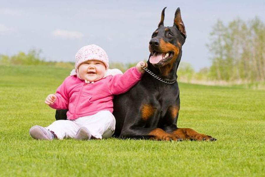 dog baby 4