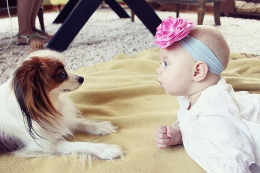dog baby 8