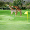 giraffe-crossing-60627-125x125-28250.jpg
