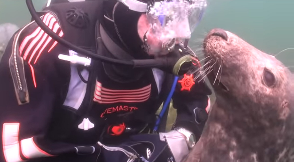 scuba-seal-encounter-10