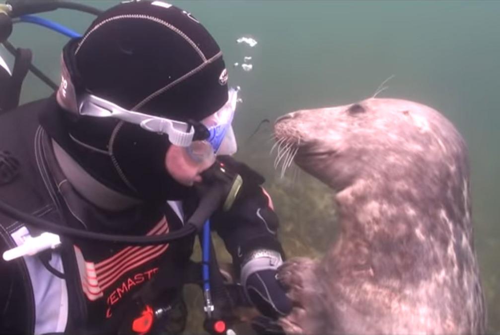 scuba-seal-encounter-12