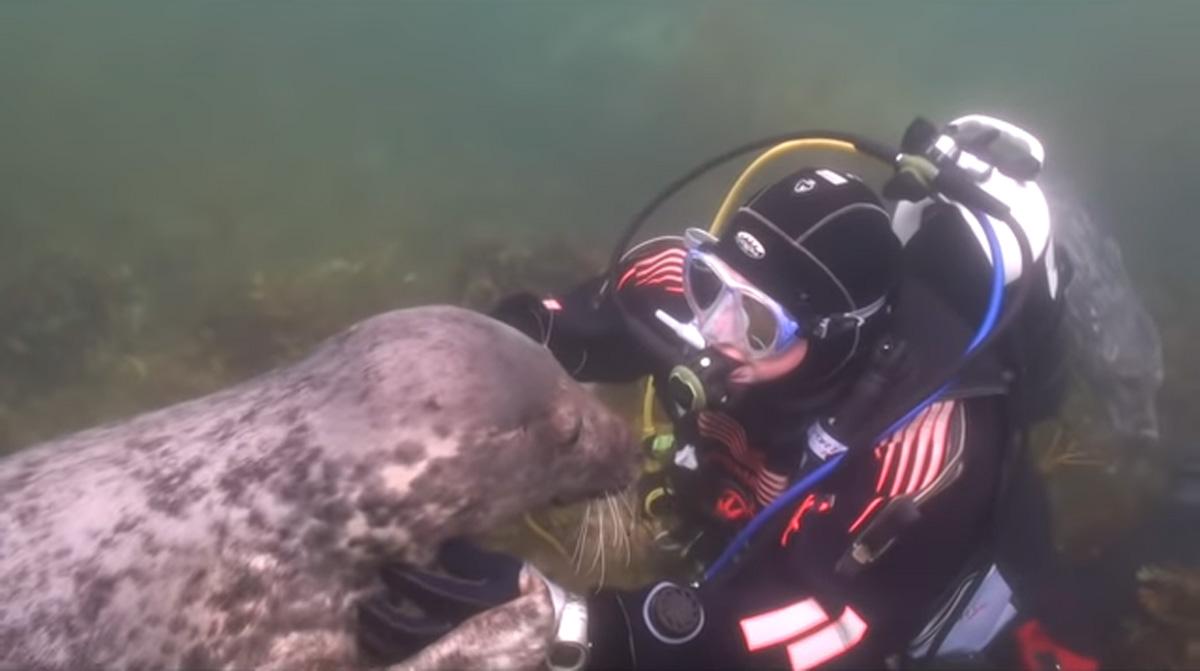 scuba-seal-encounter-13