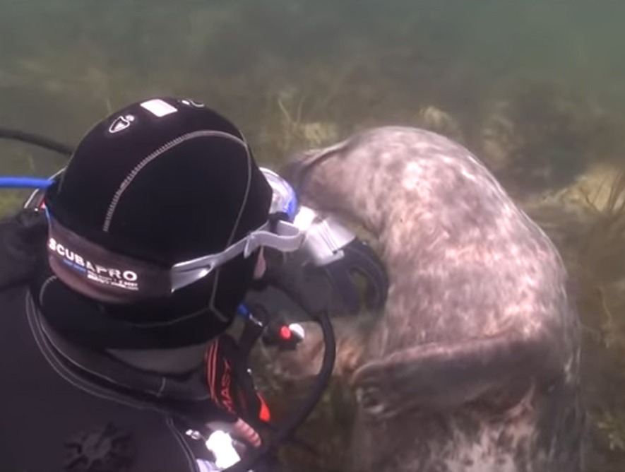 scuba-seal-encounter-14