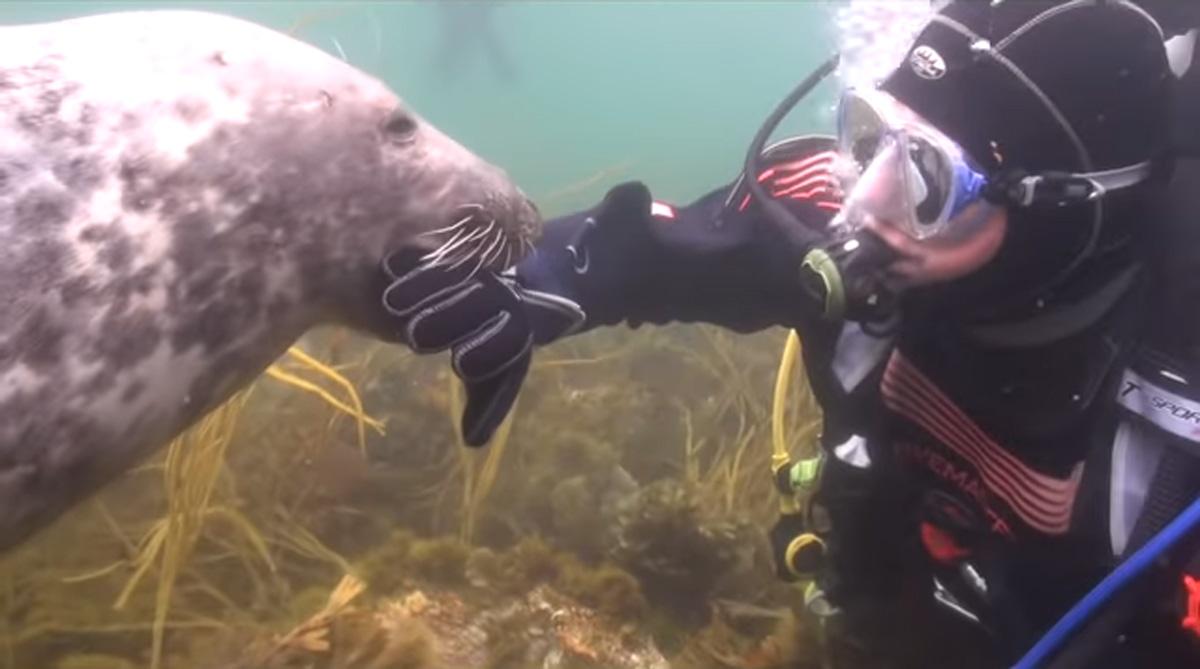 scuba-seal-encounter-16