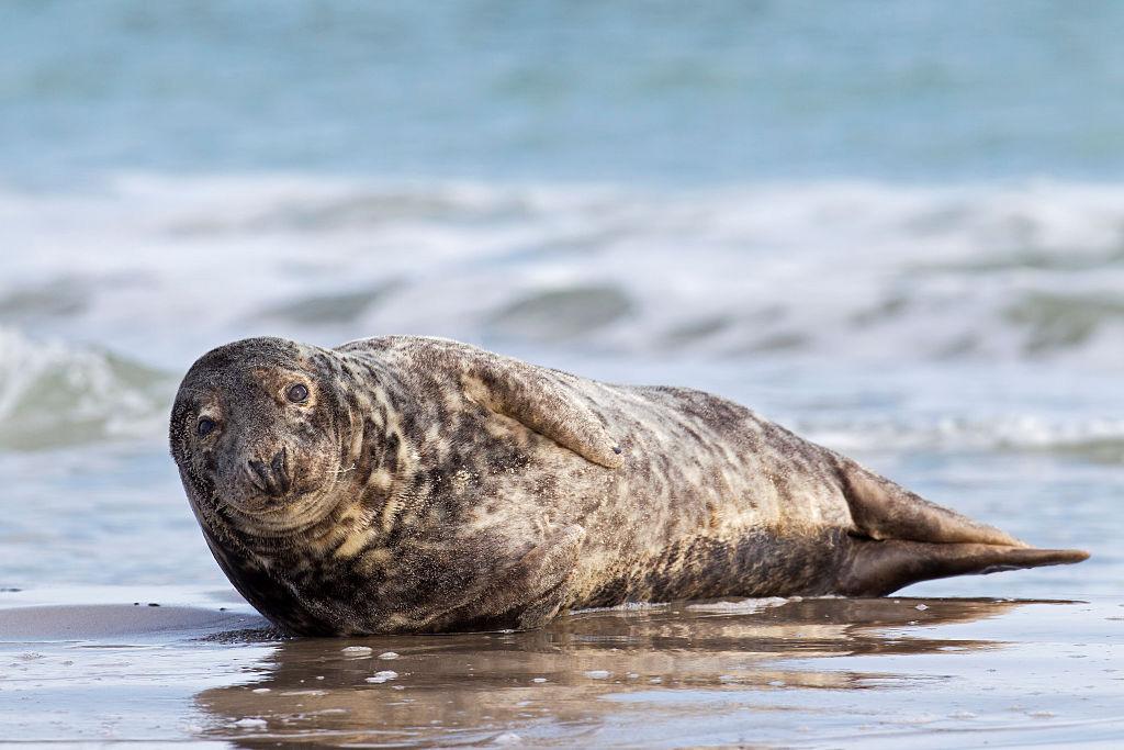 scuba-seal-encounter-17