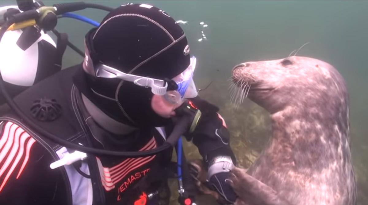 scuba-seal-encounter-18