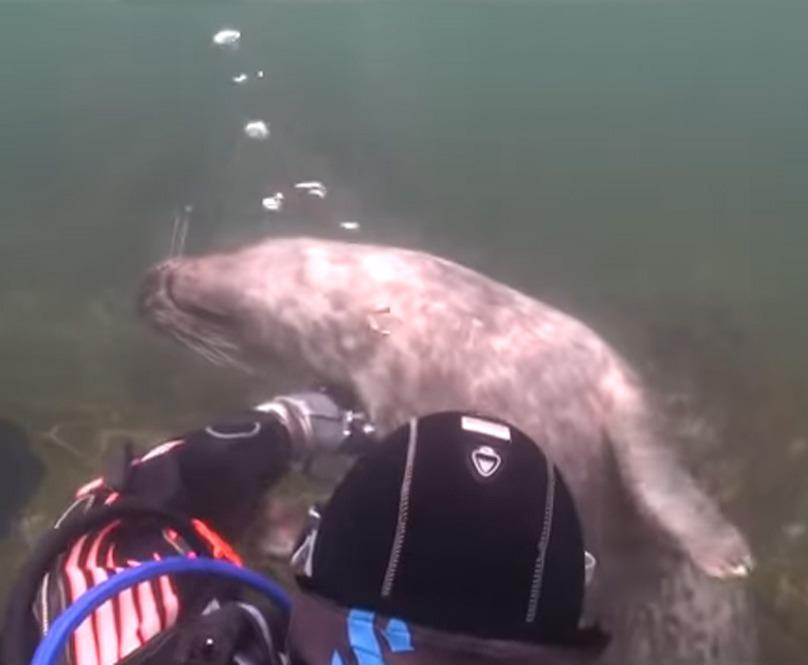 scuba-seal-encounter-19