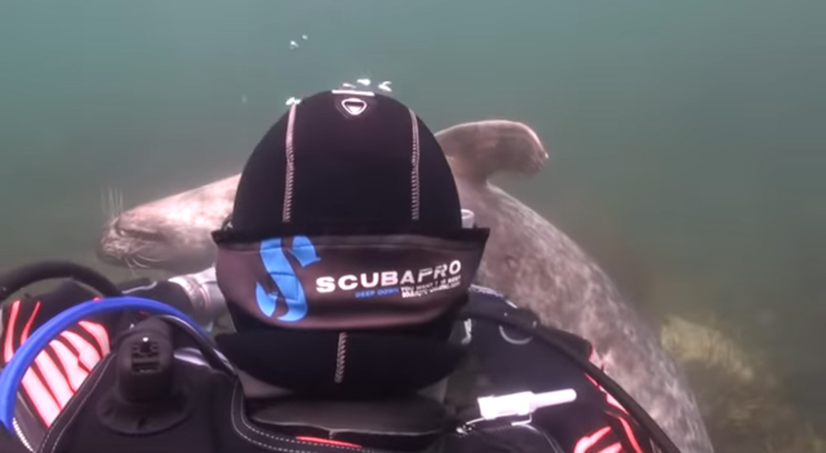 scuba-seal-encounter-20