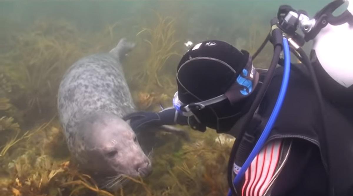 scuba-seal-encounter-21