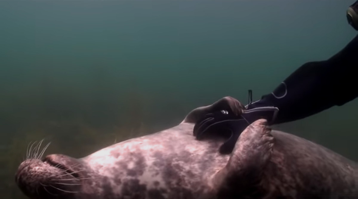 scuba-seal-encounter-22
