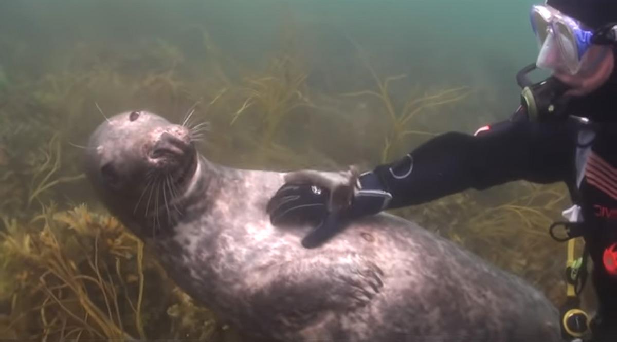 scuba-seal-encounter-23