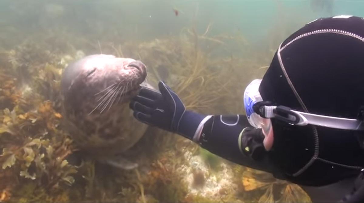 scuba-seal-encounter-24