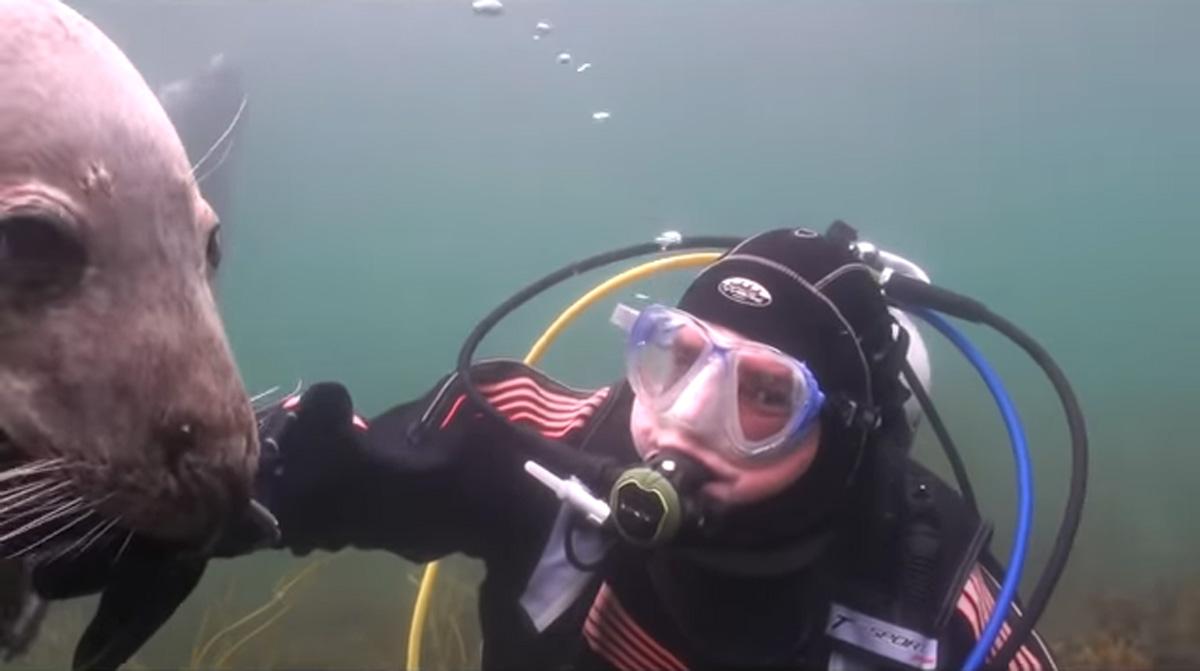 scuba-seal-encounter-25
