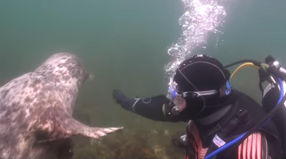 scuba-seal-encounter-26