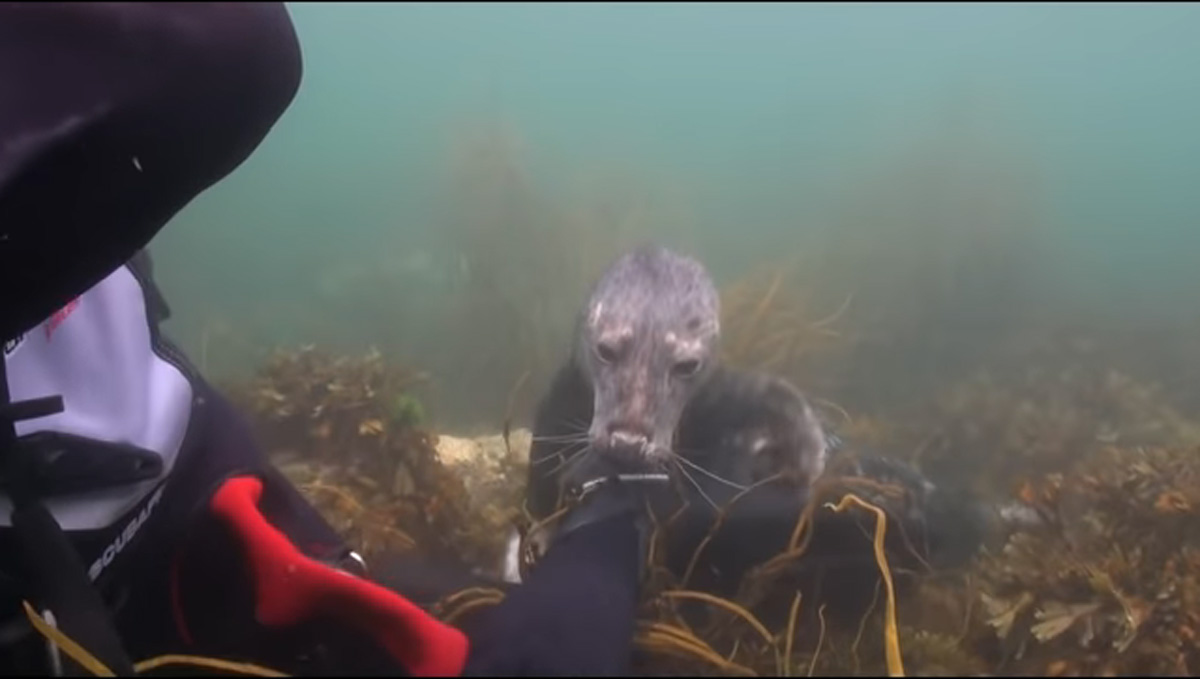 scuba-seal-encounter-28