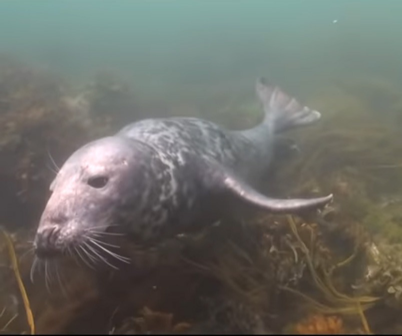 scuba-seal-encounter-8