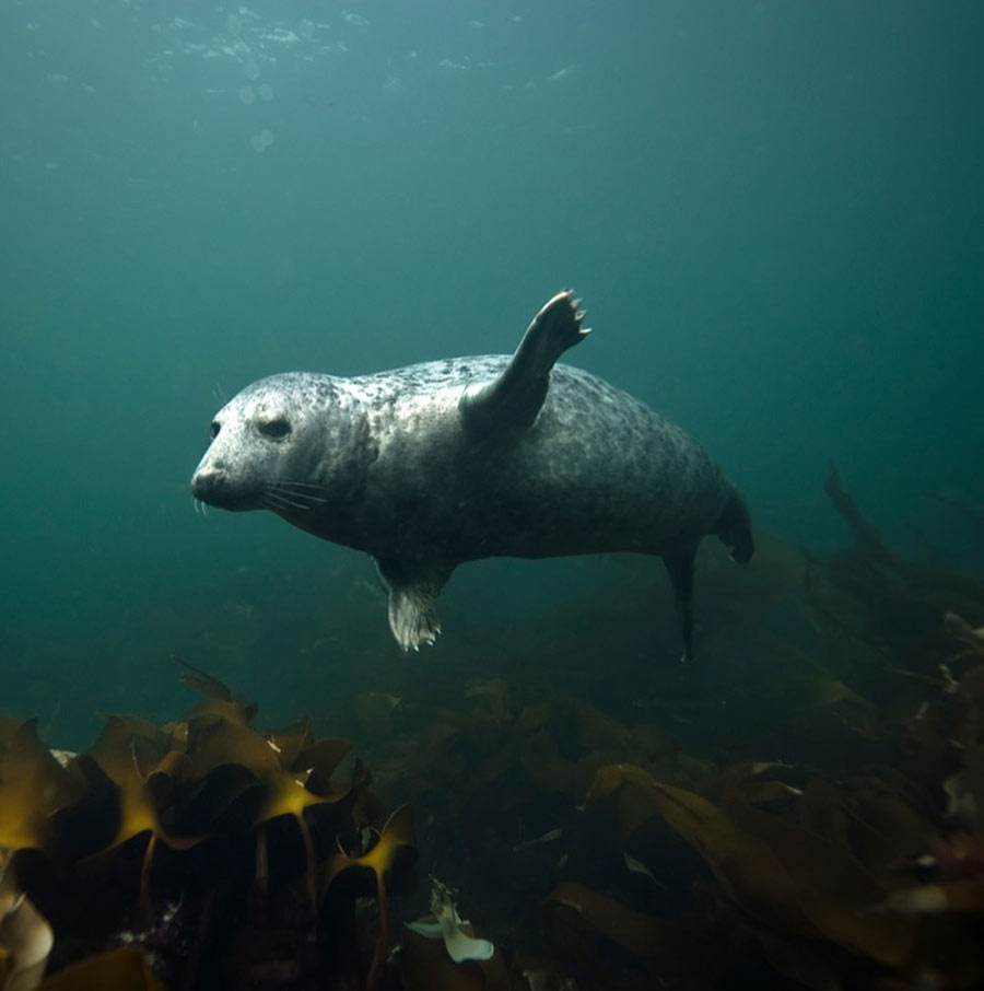 scuba-seal-encounter-11-39761