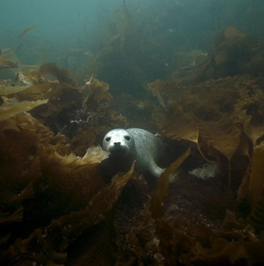 scuba-seal-encounter-15-80405
