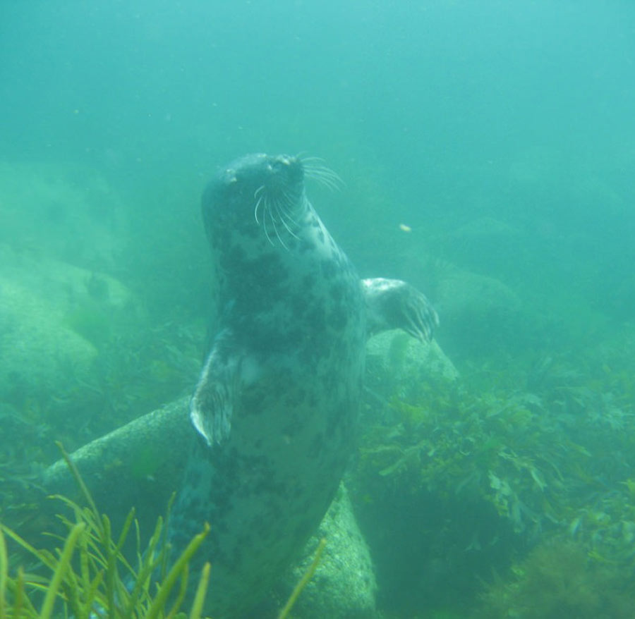 scuba-seal-encounter-4-14646