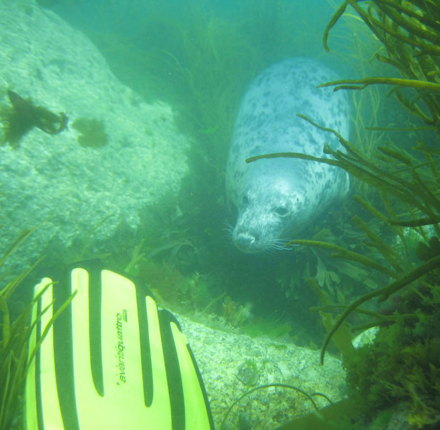 scuba-seal-encounter-5-50976