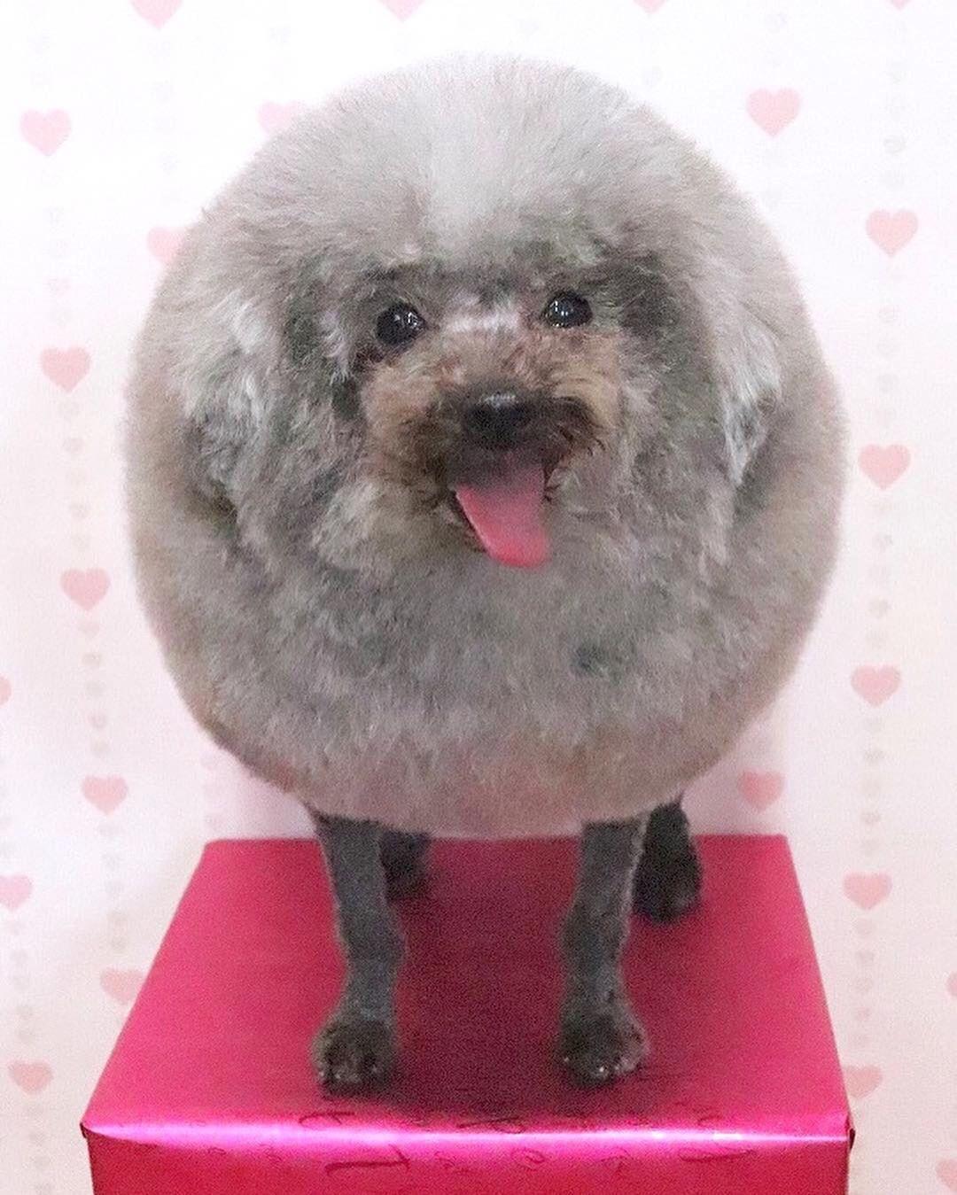 happy circle dog