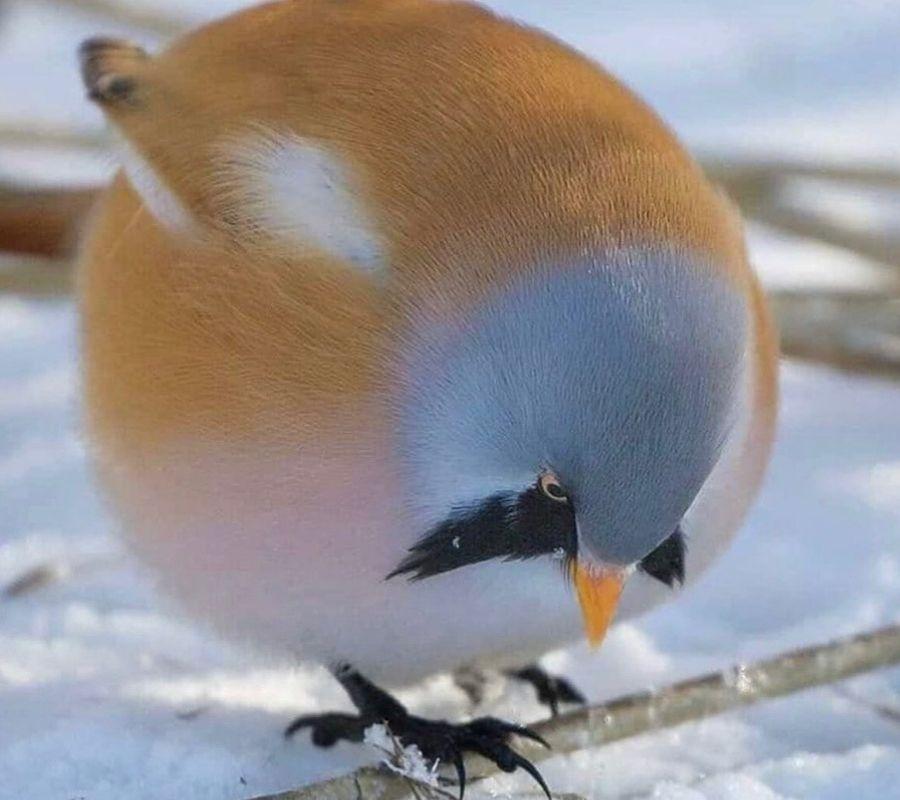 round little birdy