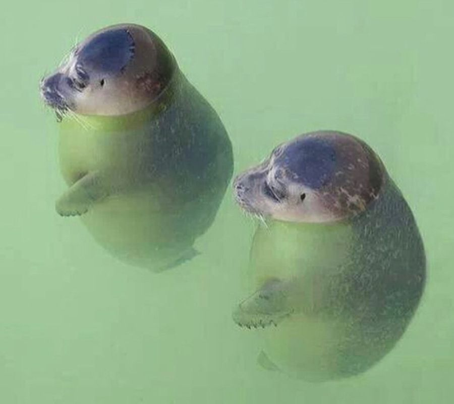 round seals floating in water