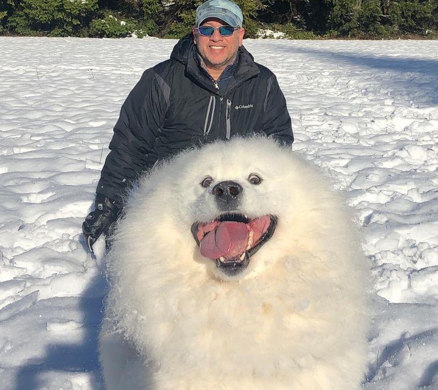 cute big white fluffy dog