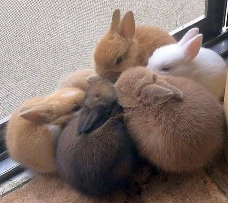 bunnies happy together in a circle