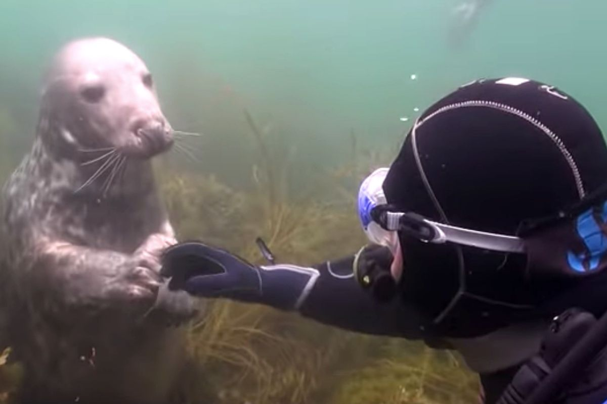 diver seal ad