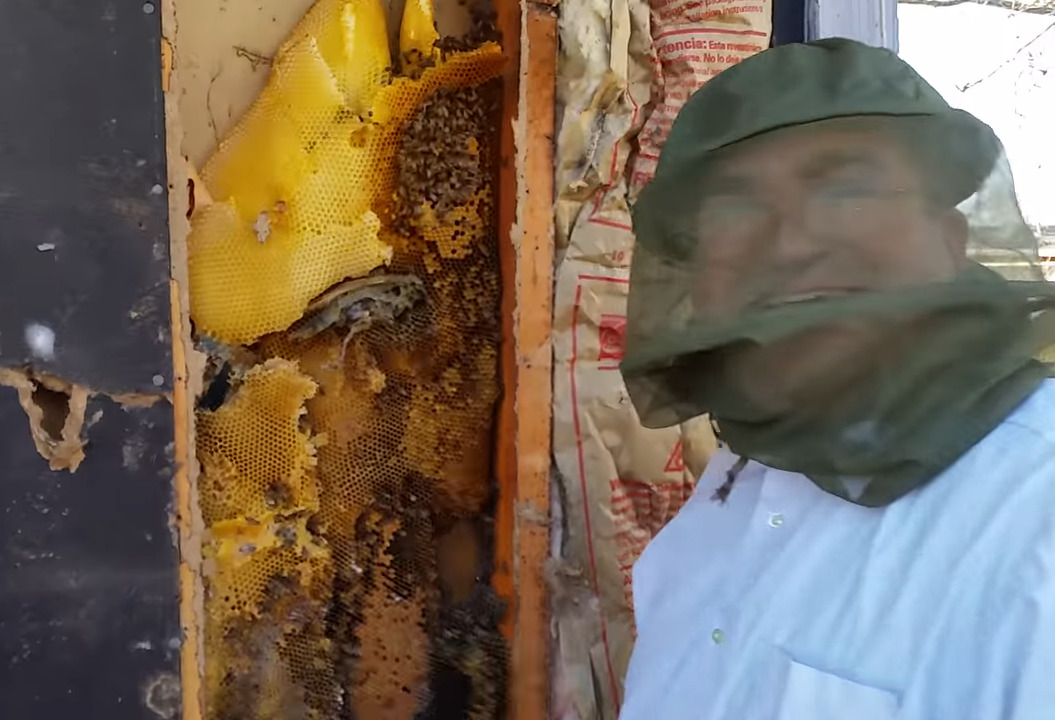 Professionals safely remove bees from a home wall in Ogden, Utah.