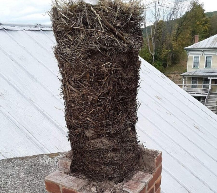 25 generations of bird nests in an old unused chimney