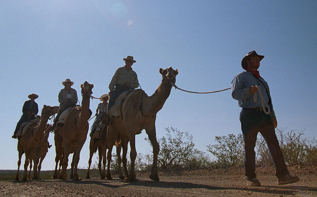 Camel tours in Texas