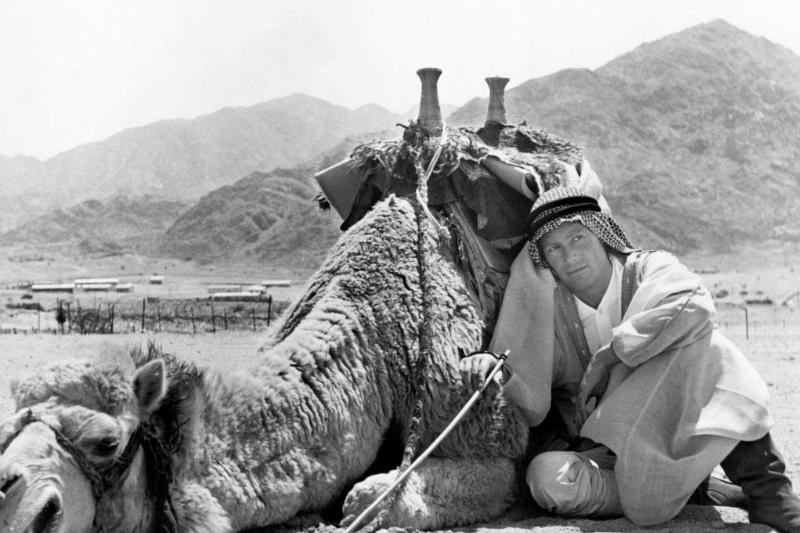 man next to camel-180969883