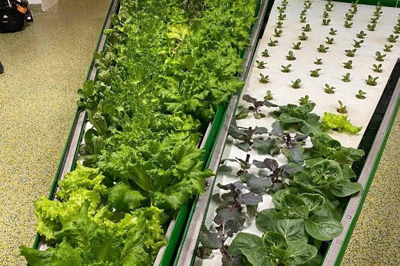 Hydroponics & Aquaponics For Fresh Produce