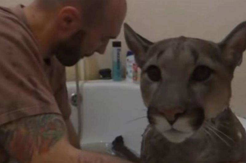 There Are Other Challenges To Taking Care Of A Puma