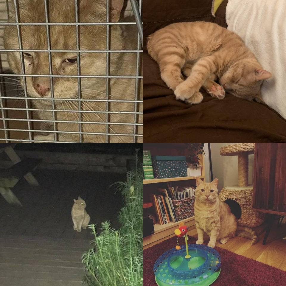 ginger cat that found a new home