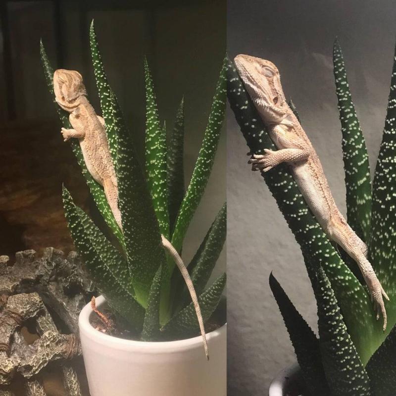 lizard sitting on a plant