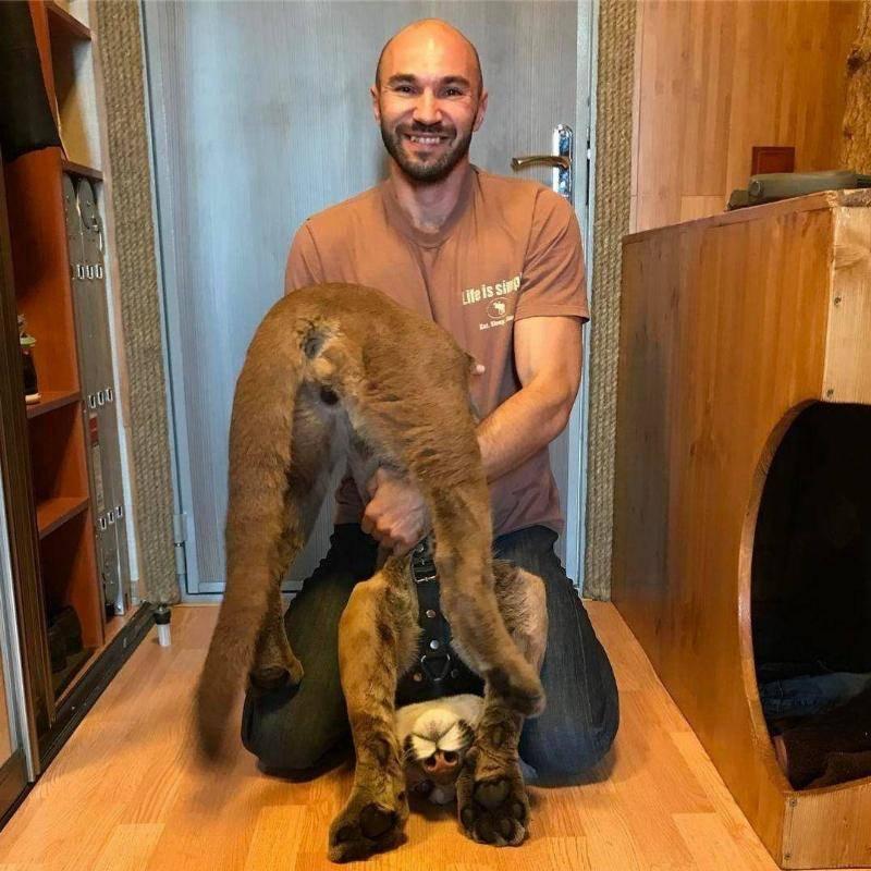 puma-housecat-flipped-upside-down-88645-16853