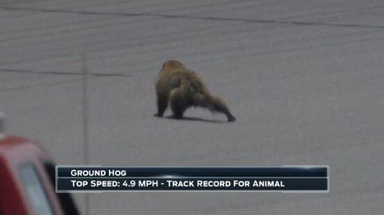 2018-05-22 14_36_31-FOX_ NASCAR on Twitter_ _Watch_ It's #GroundhogDay at @MISpeedway. What a catch .jpg