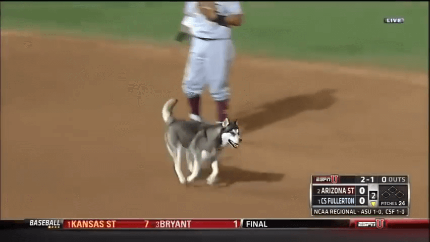 Dog rushes field during NCAA baseball tournament..Husky interrupts NCAA game Fullerton Arizona screenshot.png