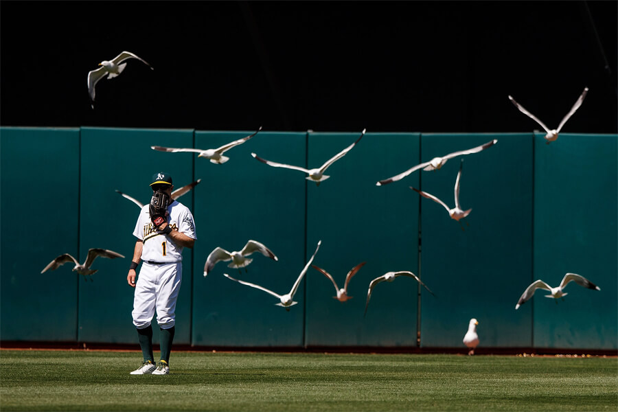 birds and baseball.jpg