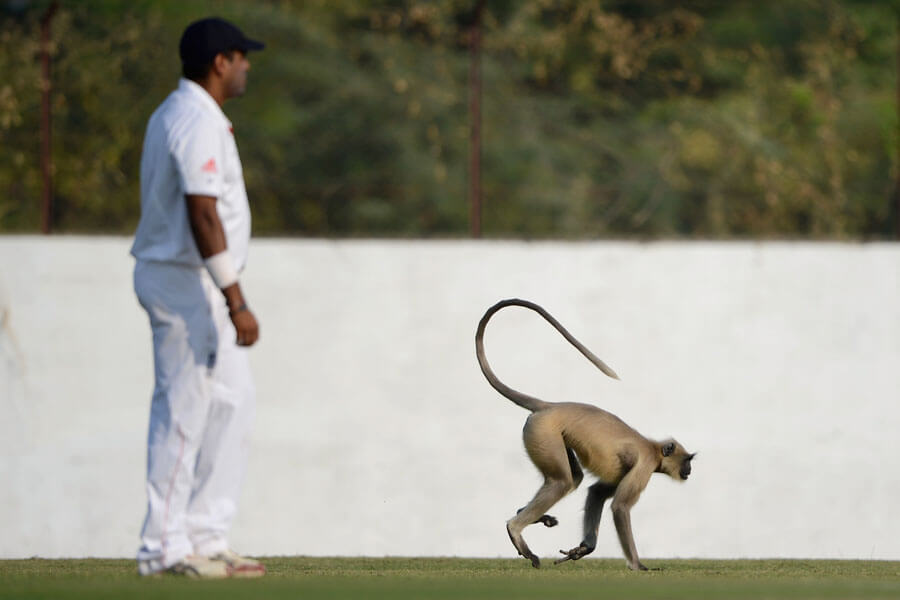 monkey cricket.jpg