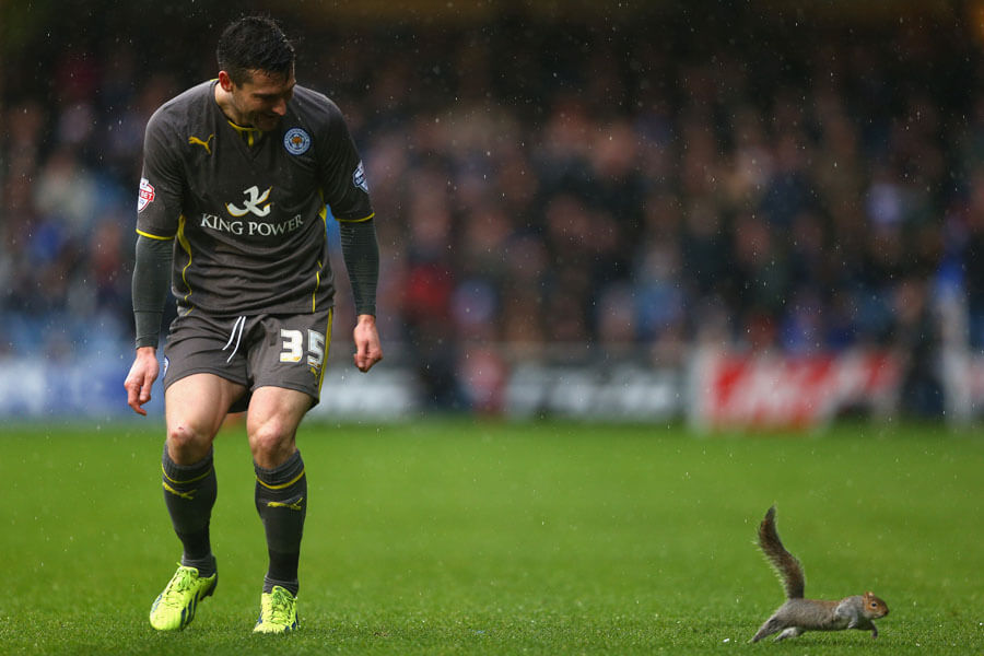 squirrel hates soccer.jpg